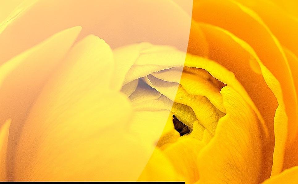 Flowers Flash Template New Screenshots BIG