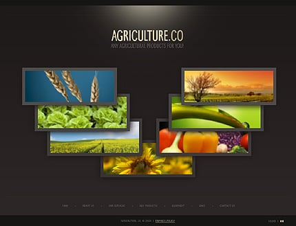 Website Template #25332