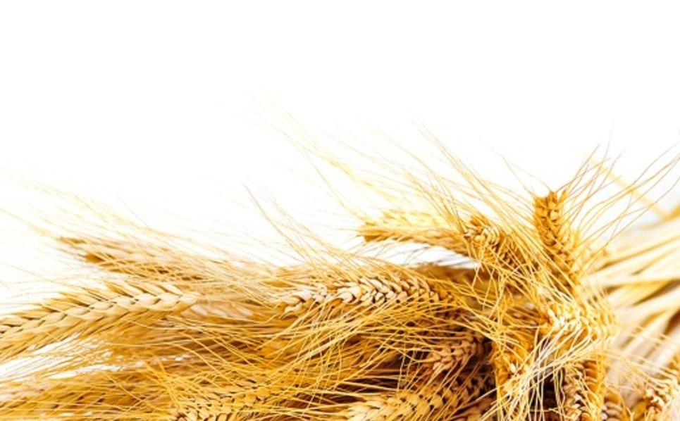 Agriculture Facebook Template New Screenshots BIG