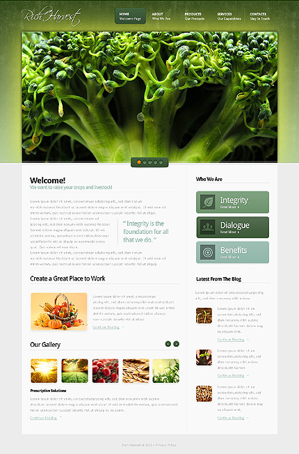 Website Template #37861