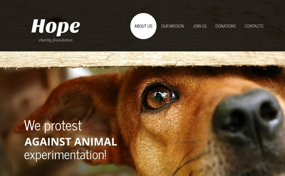 Animal Shelter Flash Template New Screenshots BIG