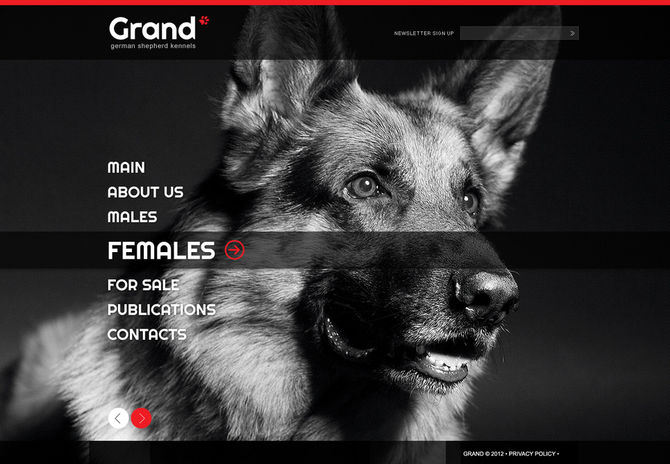 Kennel Flash Template - image