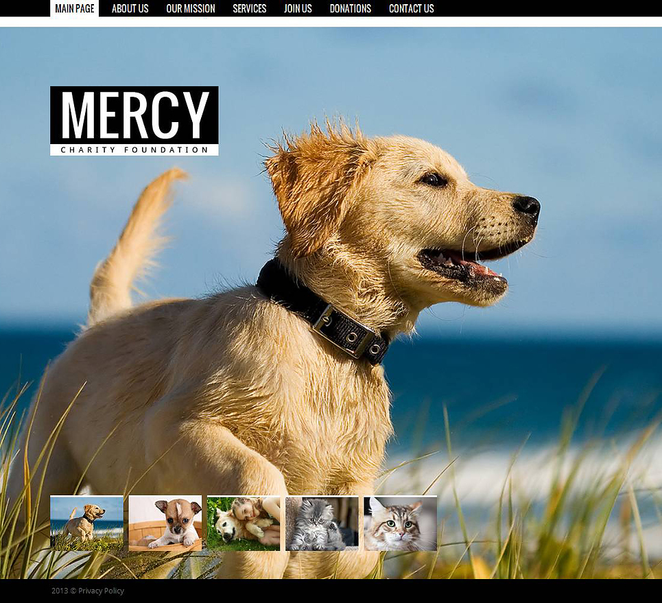 Animal Charity Website Template - image