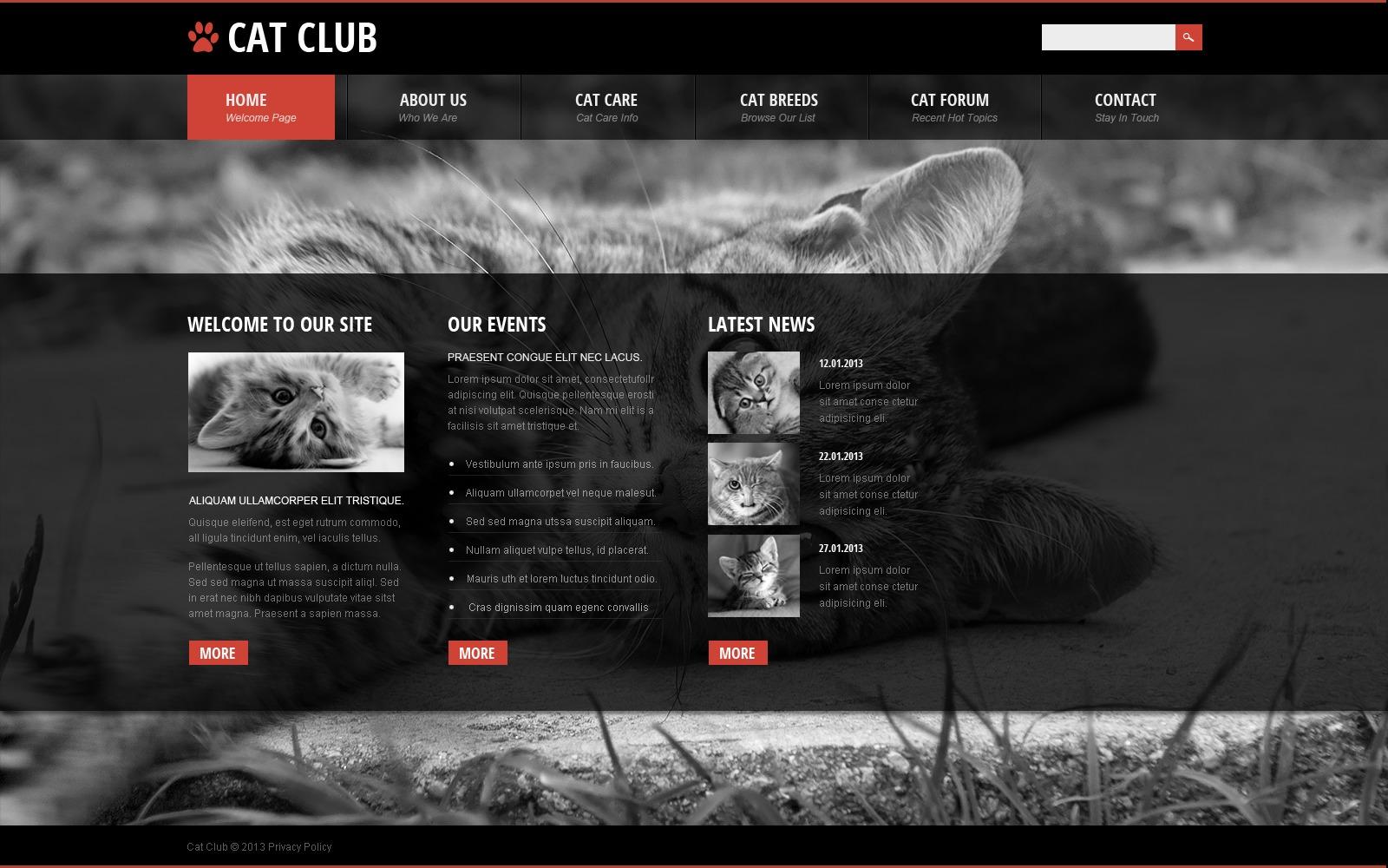 Animal Web Sites Images Hewan Lucu Terbaru