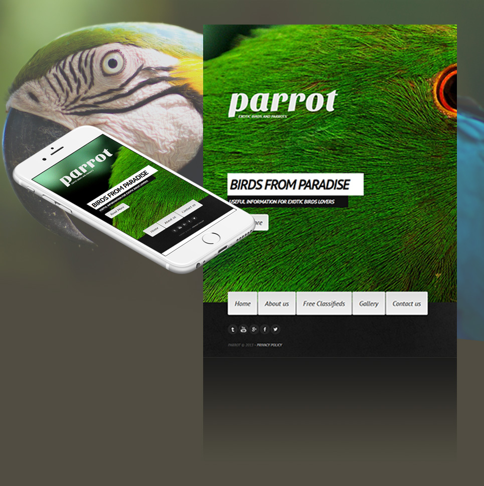 Website Template with a Background Photo for Exotic Bird Breeders - image