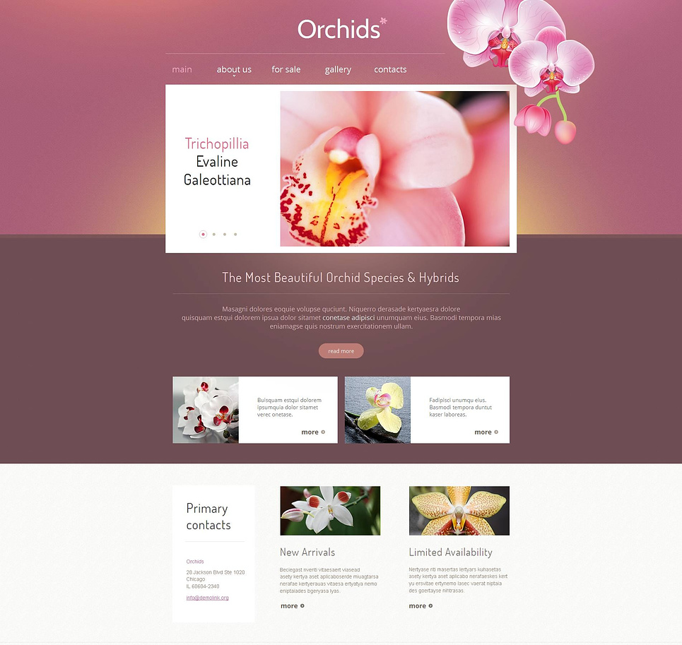 Orchids Website Template in White and Purple Tones - image