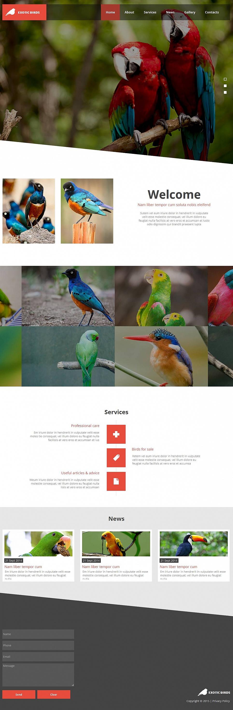 Birds Website Theme with Creative Geometry - image